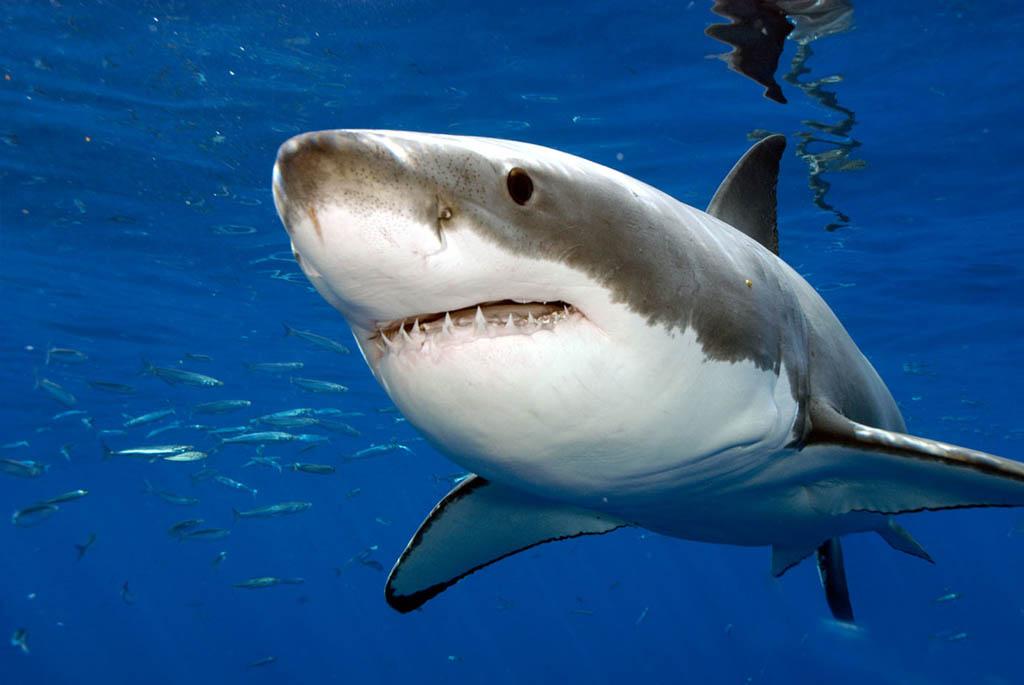 Анимации для, акула в картинках