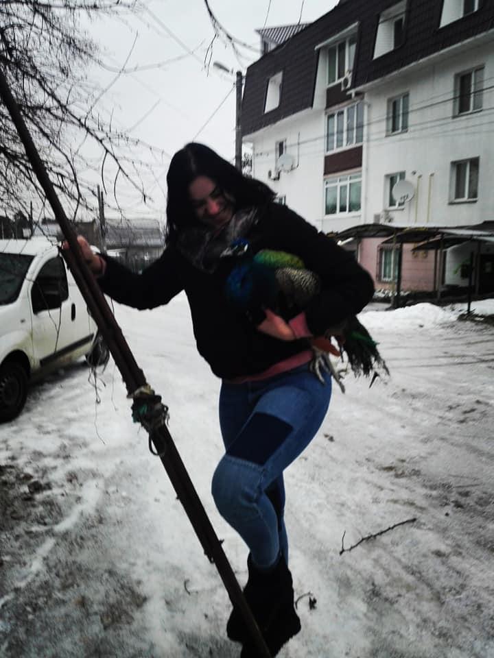 В Ирпене на дереве нашли замерзающего павлина