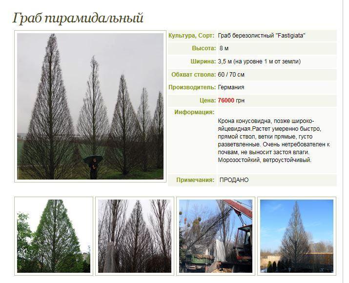 Подчиненные Кернеса в апреле купили елок по четверти миллиона за штуку 2