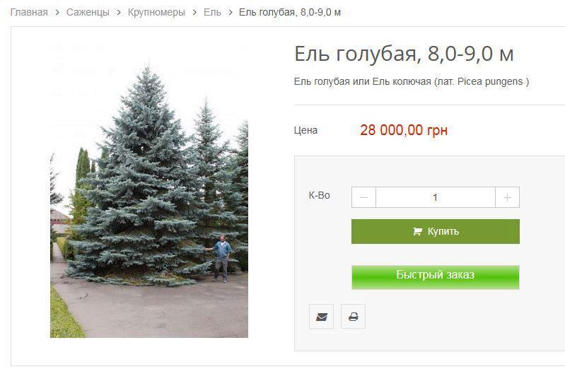 Подчиненные Кернеса в апреле купили елок по четверти миллиона за штуку 1