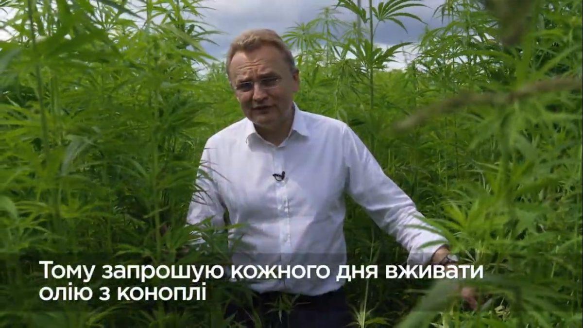 Поля конопли видео тгк в марихуане это