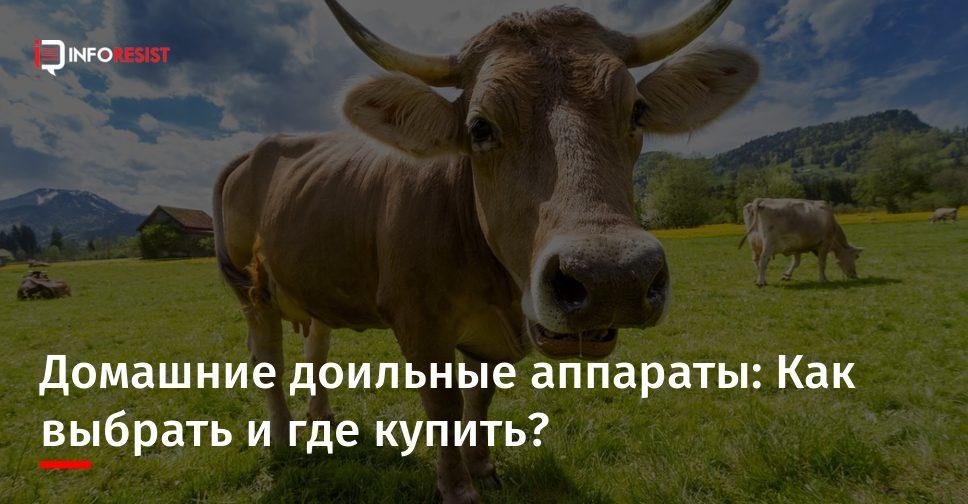 Как выбрать аппарат для доения коров