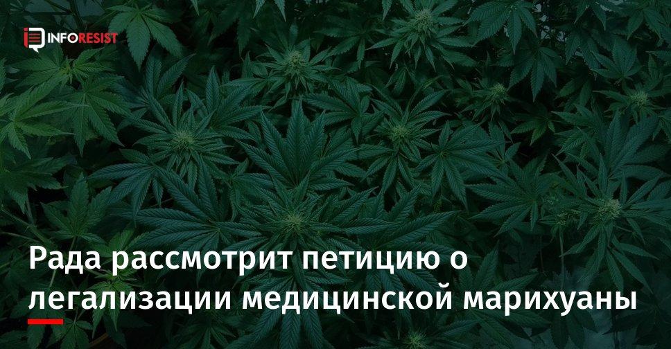 Белоруссии легализовать марихуану марихуана и поведение